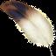 CQRLOG